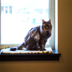 Cat boarding at our Supurrb Cat Condos